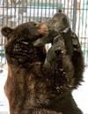 Bear02_m